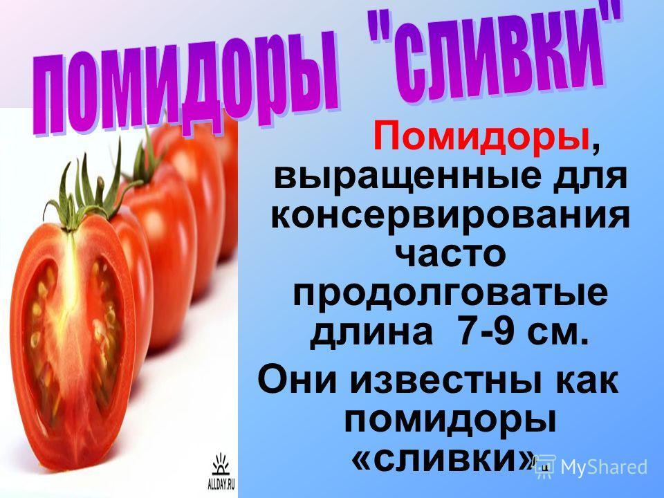 Помидоры, выращенные для консервирования часто продолговатые длина 7-9 см. Они известны как помидоры «сливки».
