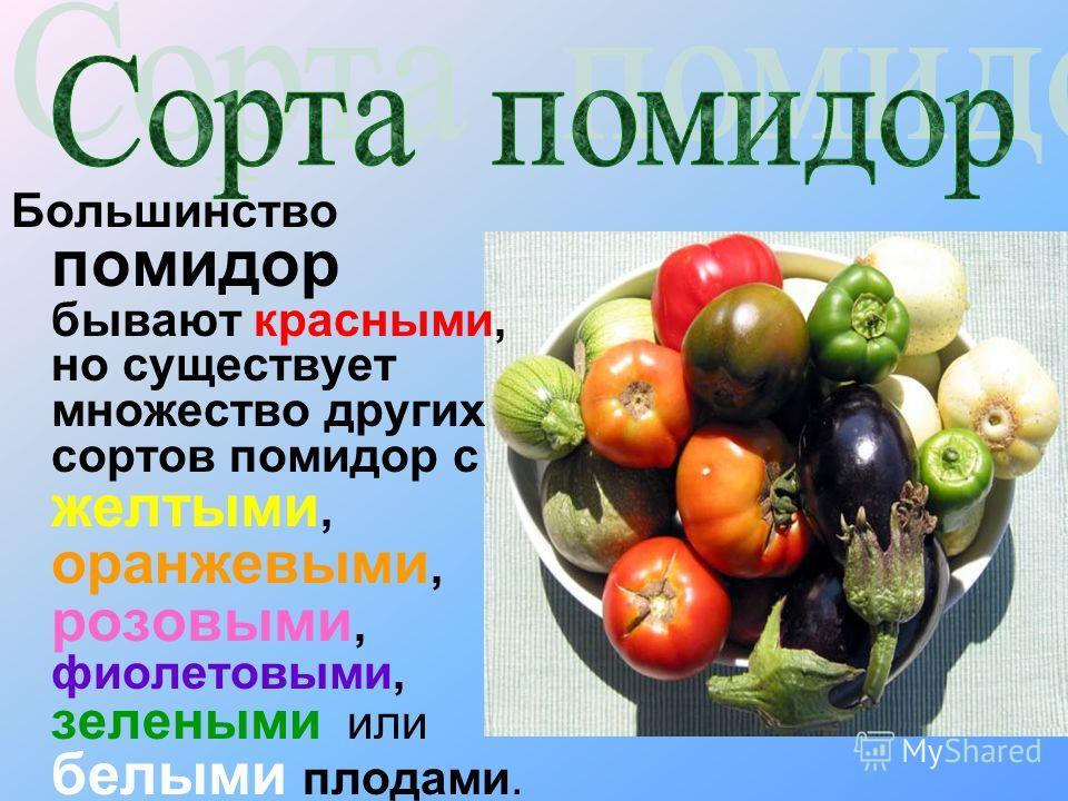 Большинство помидор бывают красными, но существует множество других сортов помидор с желтыми, оранжевыми, розовыми, фиолетовыми, зелеными или белыми плодами.