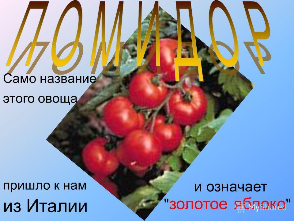 и означает этого овоща из Италии  золотое яблоко  Само название пришло к нам