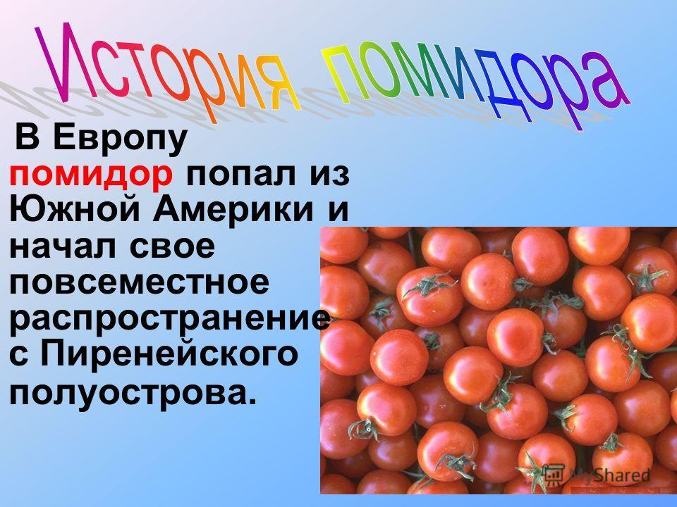 В Европу помидор попал из Южной Америки и начал свое повсеместное распространение с Пиренейского полуострова.