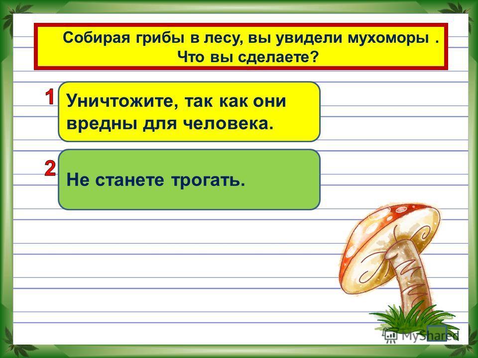 Собирая грибы в лесу, вы увидели мухоморы. Что вы сделаете? Уничтожите, так как они вредны для человека. Не станете трогать.