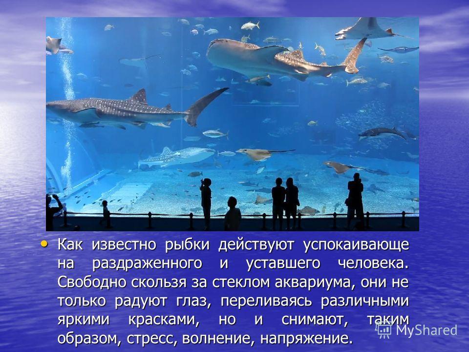 Как известно рыбки действуют успокаивающе на раздраженного и уставшего человека. Свободно скользя за стеклом аквариума, они не только радуют глаз, переливаясь различными яркими красками, но и снимают, таким образом, стресс, волнение, напряжение. Как
