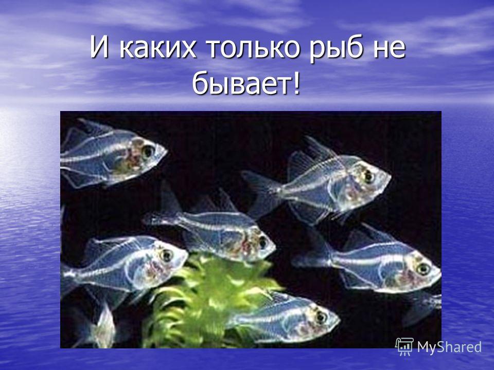 И каких только рыб не бывает!