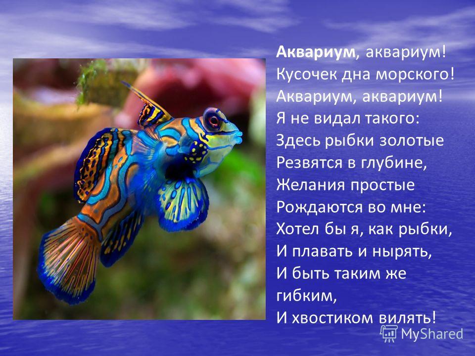 Аквариум, аквариум! Кусочек дна морского! Аквариум, аквариум! Я не видал такого: Здесь рыбки золотые Резвятся в глубине, Желания простые Рождаются во мне: Хотел бы я, как рыбки, И плавать и нырять, И быть таким же гибким, И хвостиком вилять!