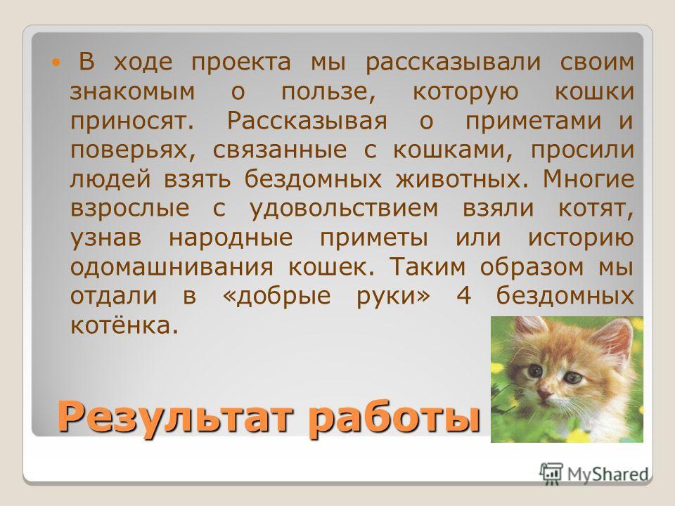Народные поверья связанные с кошками развёрнутый ответ