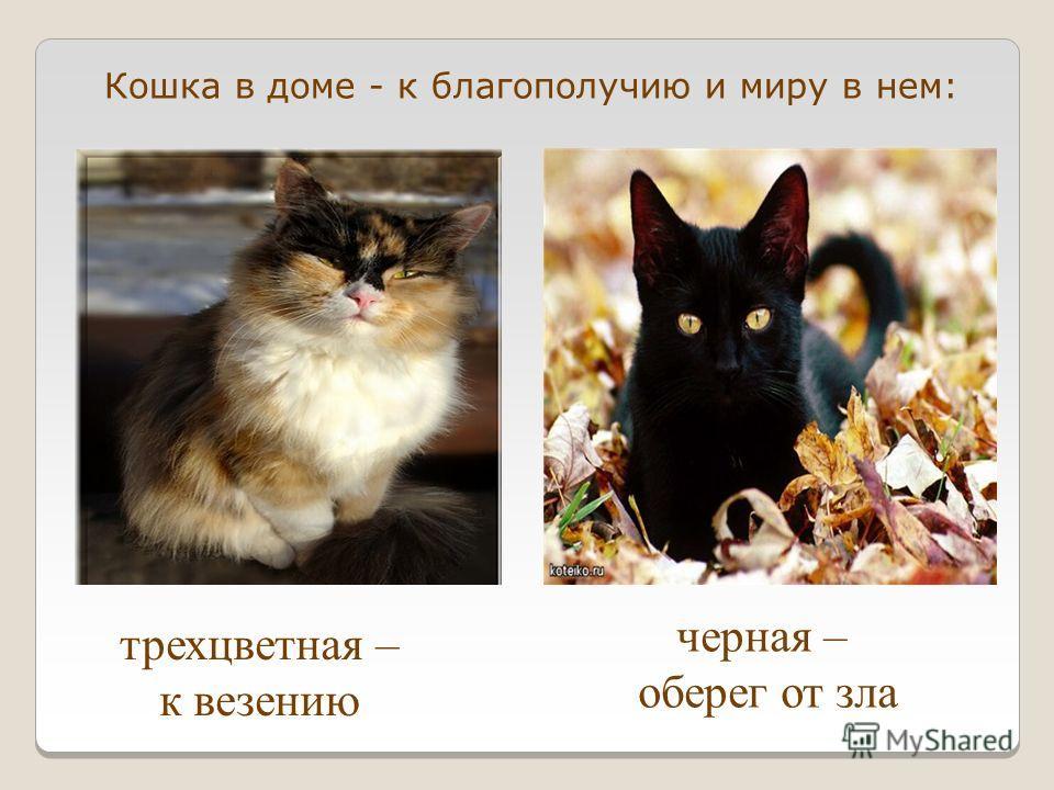 трехцветная – к везению черная – оберег от зла Кошка в доме - к благополучию и миру в нем: