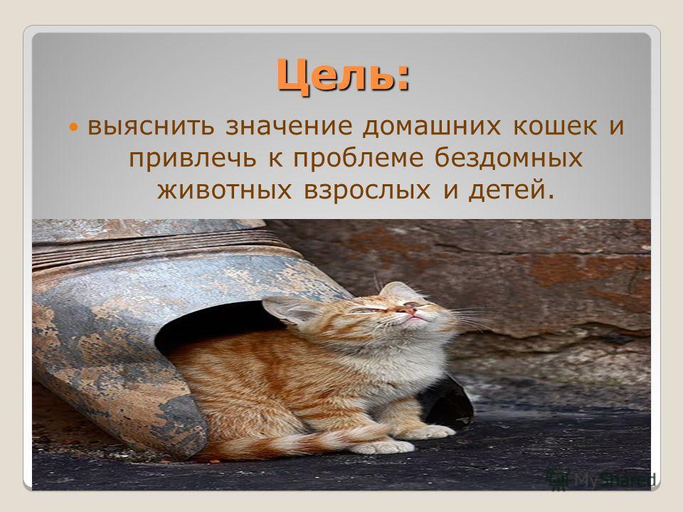 Цель: выяснить значение домашних кошек и привлечь к проблеме бездомных животных взрослых и детей.