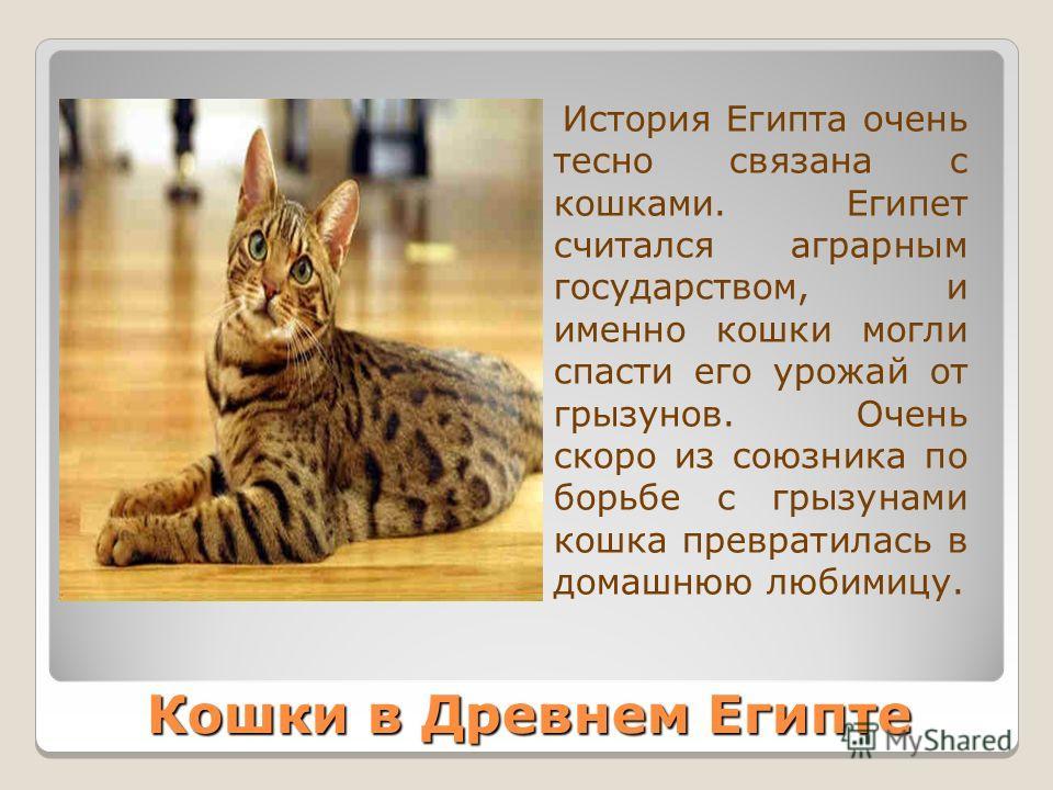 Кошки в Древнем Египте История Египта очень тесно связана с кошками. Египет считался аграрным государством, и именно кошки могли спасти его урожай от грызунов. Очень скоро из союзника по борьбе с грызунами кошка превратилась в домашнюю любимицу.