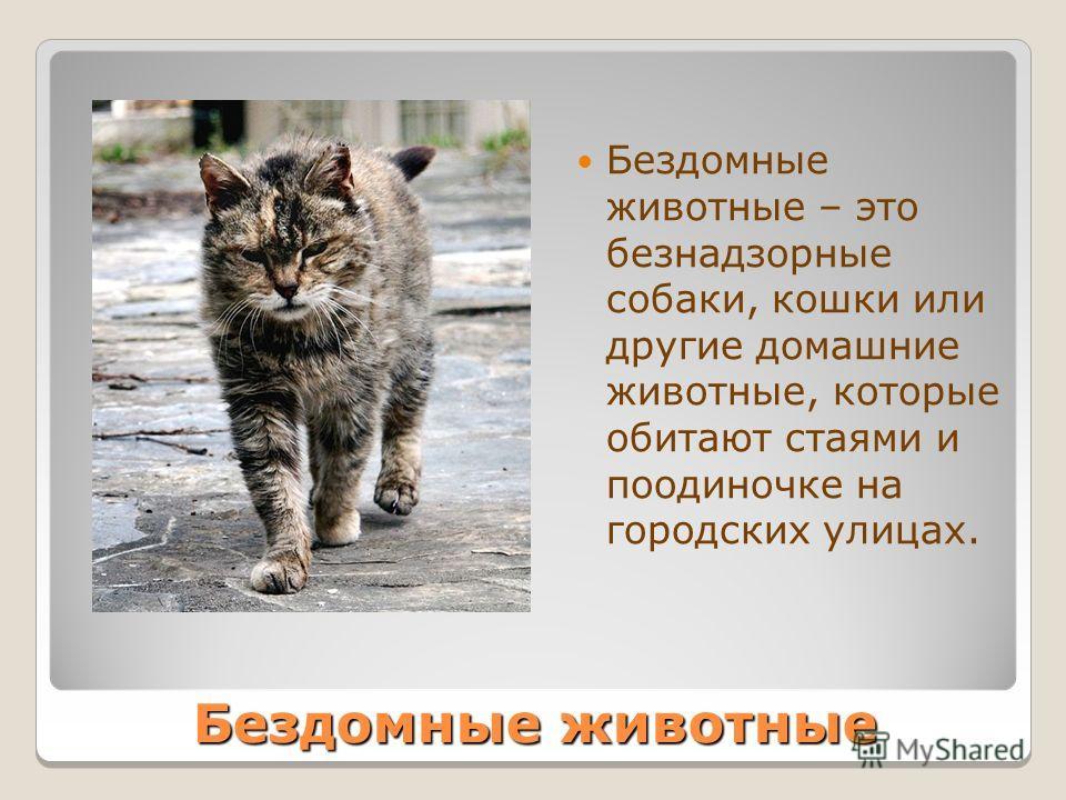 Бездомные животные Бездомные животные – это безнадзорные собаки, кошки или другие домашние животные, которые обитают стаями и поодиночке на городских улицах.