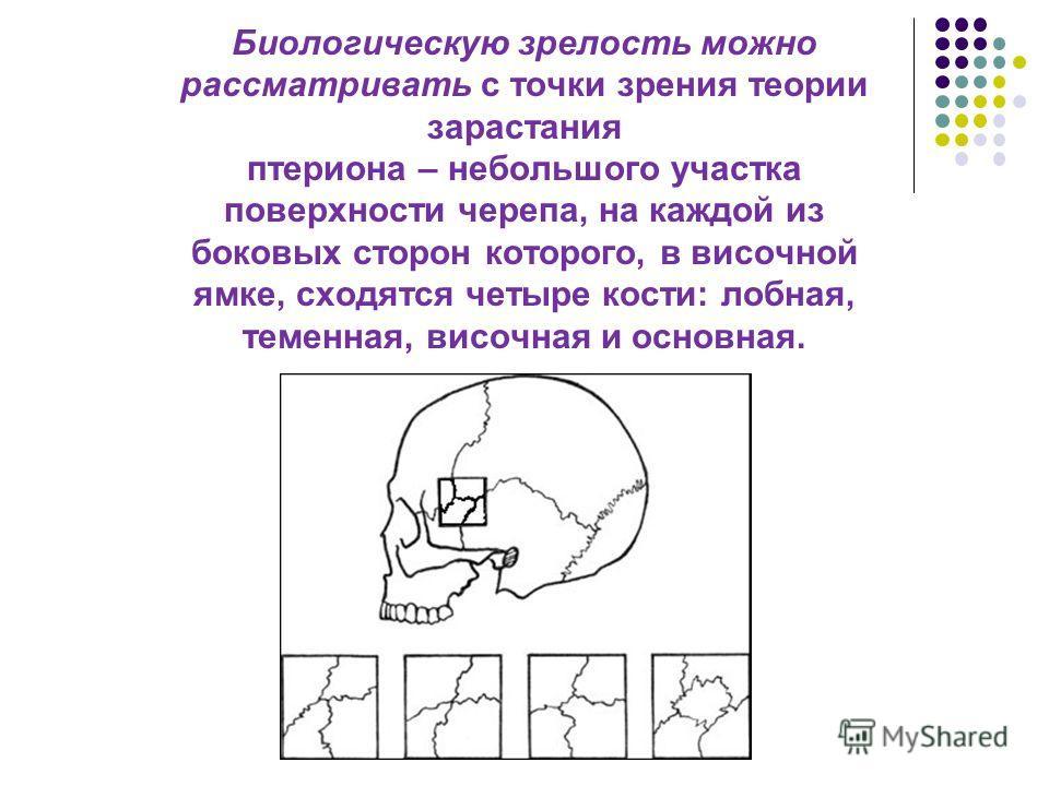 Биологическую зрелость можно рассматривать с точки зрения теории зарастания птериона – небольшого участка поверхности черепа, на каждой из боковых сторон которого, в височной ямке, сходятся четыре кости: лобная, теменная, височная и основная.