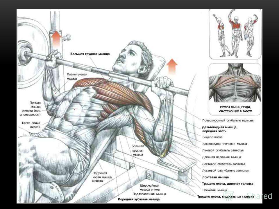 Лучший упражнение для грудной мышцы домашних условиях 181