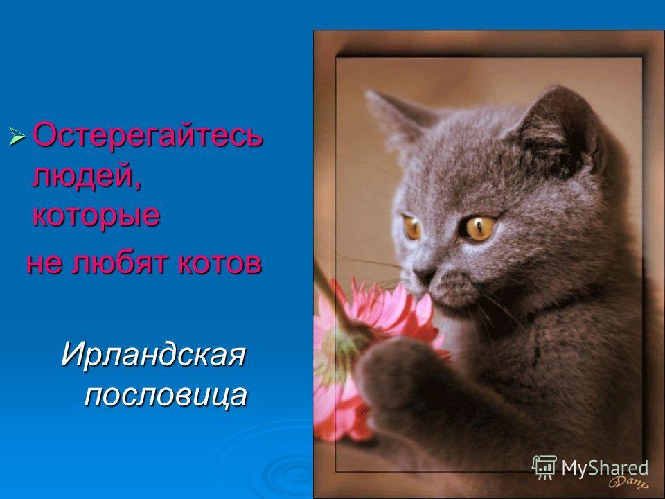 Остерегайтесь людей, которые Остерегайтесь людей, которые не любят котов не любят котов Ирландская пословица