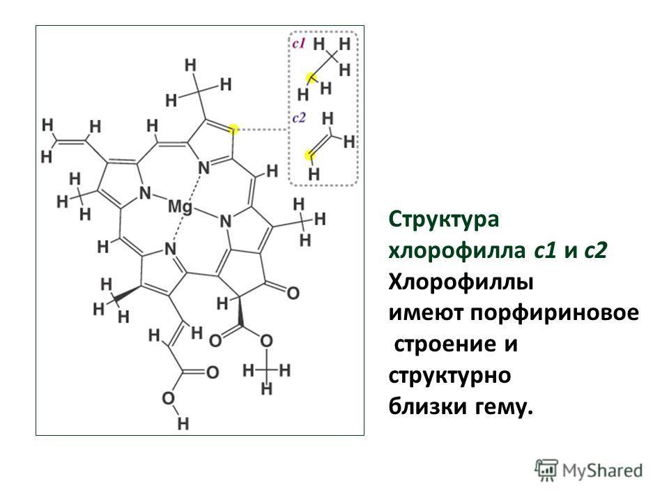 Структура хлорофилла c1 и c2 Хлорофиллы имеют порфириновое строение и структурно близки гему.