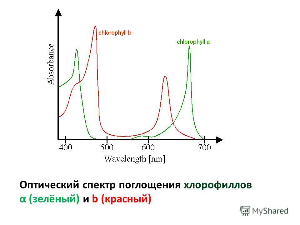 Оптический спектр поглощения хлорофиллов α (зелёный) и b (красный)