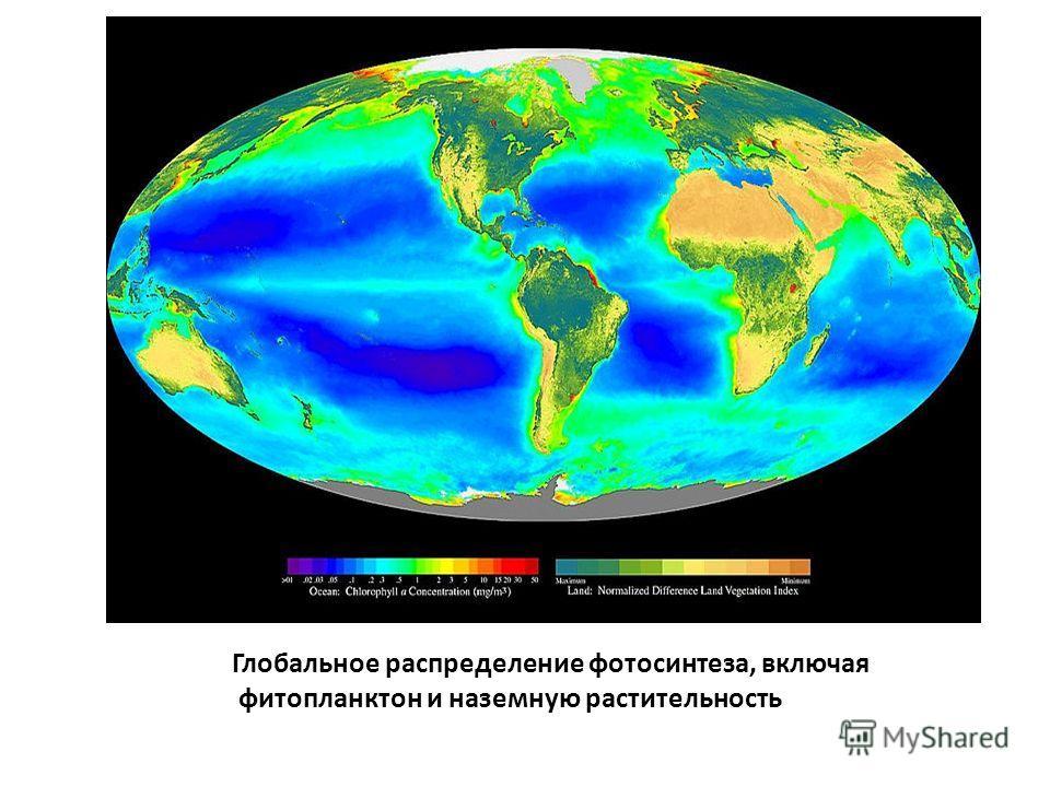 Глобальное распределение фотосинтеза, включая фитопланктон и наземную растительность