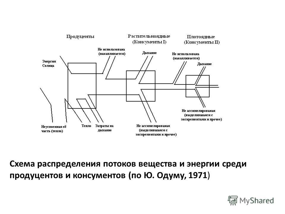 Схема распределения потоков вещества и энергии среди продуцентов и консументов (по Ю. Одуму, 1971)