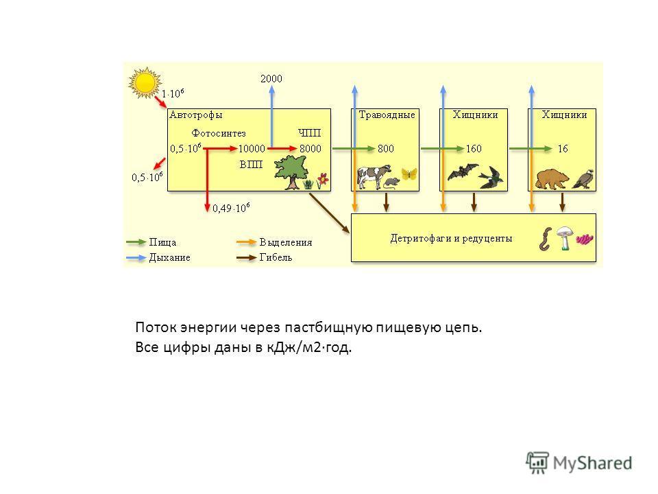 Поток энергии через пастбищную пищевую цепь. Все цифры даны в кДж/м2·год.