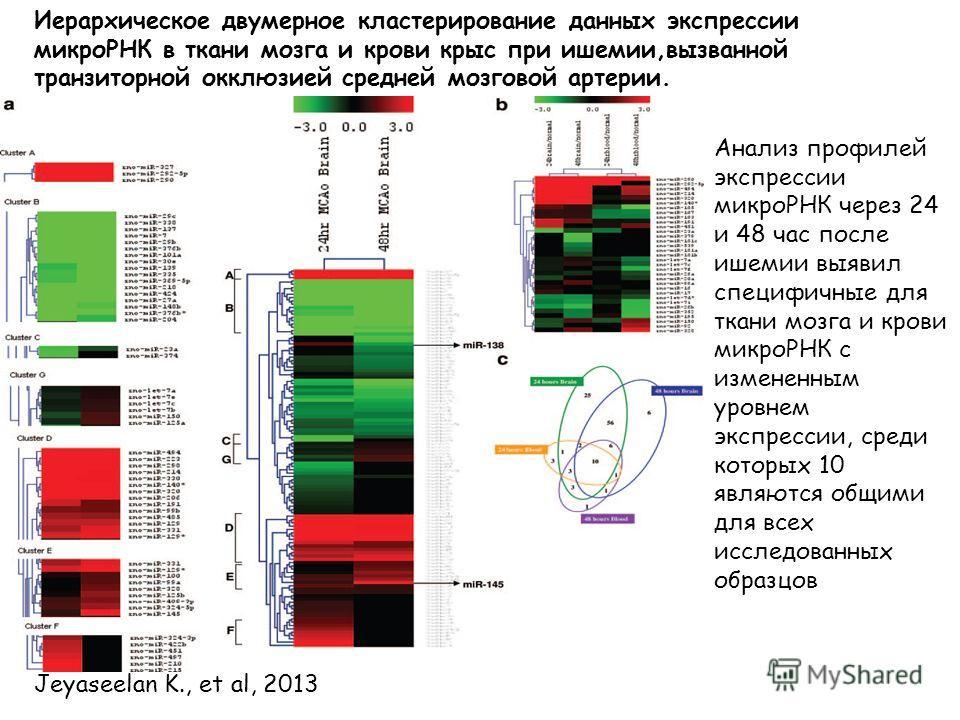 Иерархическое двумерное кластерирование данных экспрессии микроРНК в ткани мозга и крови крыс при ишемии,вызванной транзиторной окклюзией средней мозговой артерии. Jeyaseelan K., et al, 2013 Анализ профилей экспрессии микроРНК через 24 и 48 час после