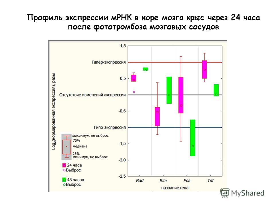 Профиль экспрессии мРНК в коре мозга крыс через 24 часа после фототромбоза мозговых сосудов