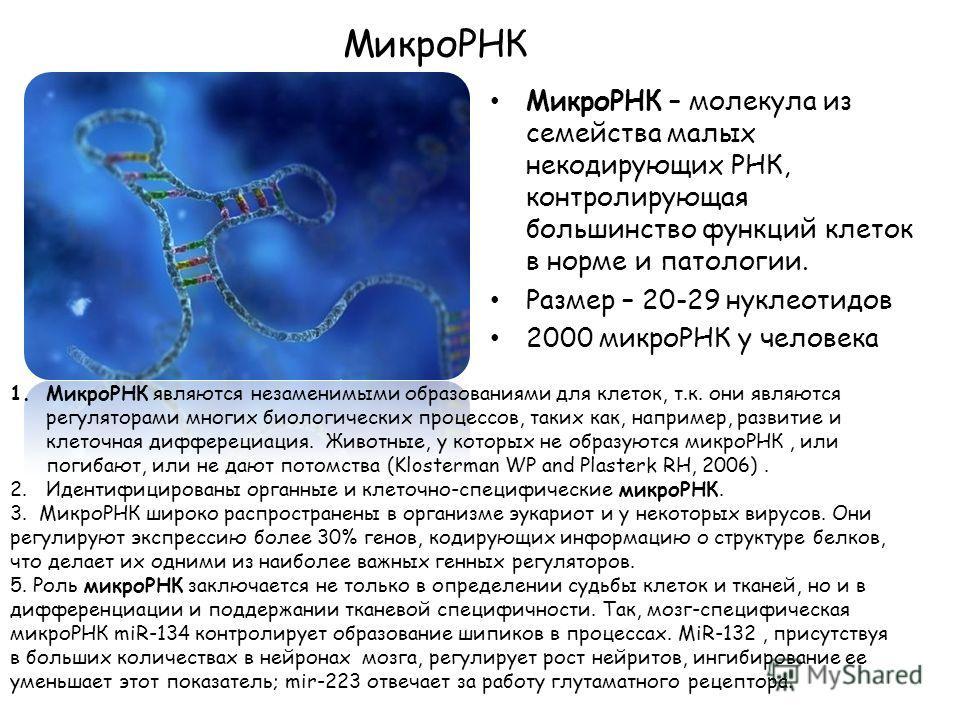 МикроРНК МикроРНК – молекула из семейства малых некодирующих РНК, контролирующая большинство функций клеток в норме и патологии. Размер – 20-29 нуклеотидов 2000 микроРНК у человека 1.МикроРНК являются незаменимыми образованиями для клеток, т.к. они я