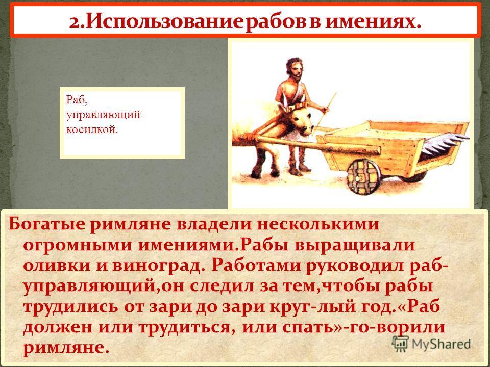 Богатые римляне владели несколькими огромными имениями.Рабы выращивали оливки и виноград. Работами руководил раб- управляющий,он следил за тем,чтобы рабы трудились от зари до зари круг-лый год.«Раб должен или трудиться, или спать»-го-ворили римляне.