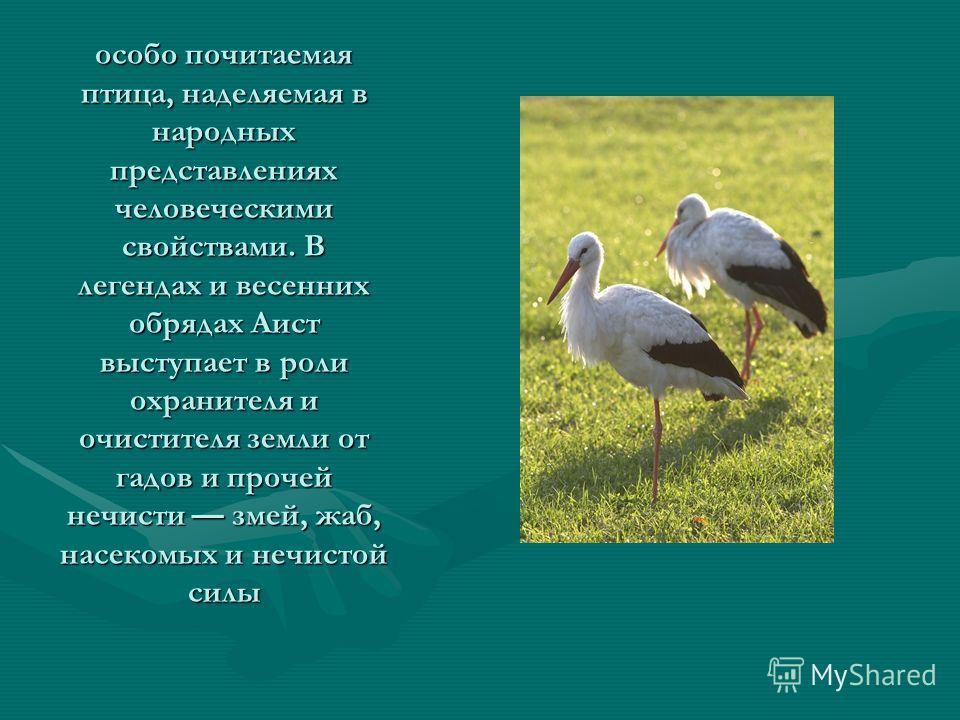особо почитаемая птица, наделяемая в народных представлениях человеческими свойствами. В легендах и весенних обрядах Аист выступает в роли охранителя и очистителя земли от гадов и прочей нечисти змей, жаб, насекомых и нечистой силы