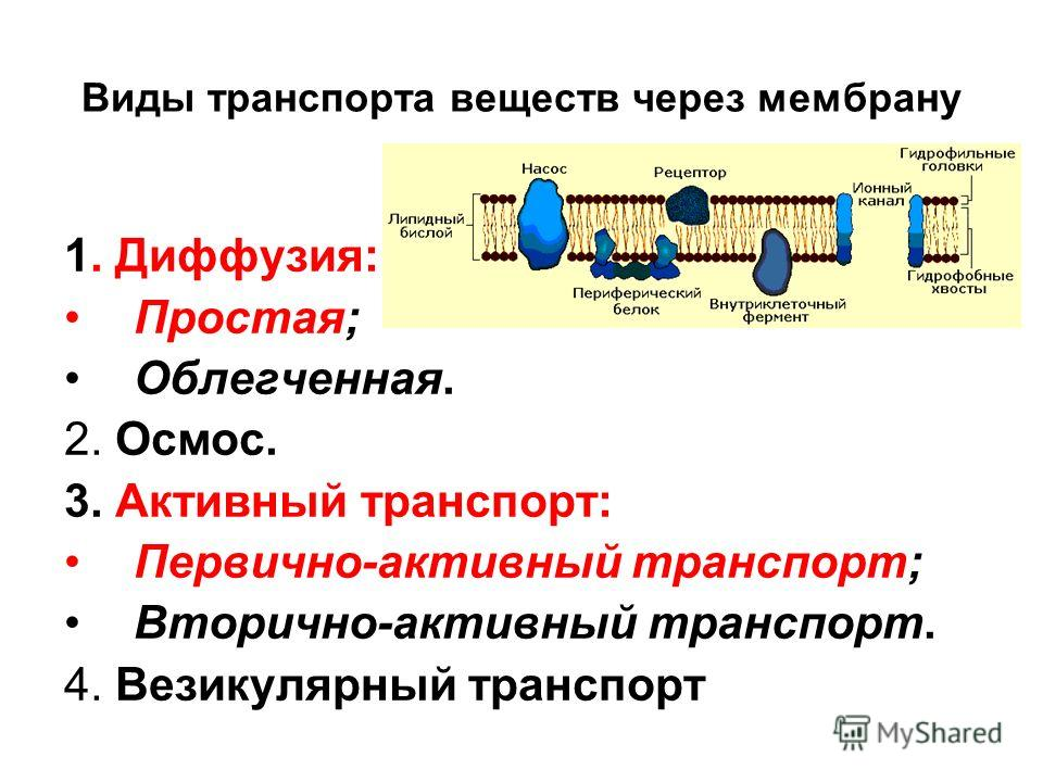 Виды транспорта веществ через