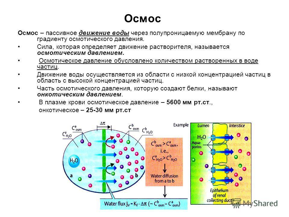 Осмос Осмос – пассивное движение воды через полупроницаемую мембрану по градиенту осмотического давления. Сила, которая определяет движение растворителя, называется осмотическим давлением. Осмотическое давление обусловлено количеством растворенных в