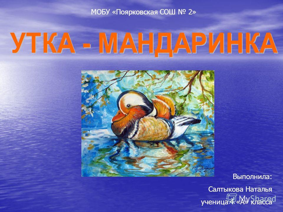 Выполнила: Салтыкова Наталья ученица 4 «А» класса МОБУ «Поярковская СОШ 2»