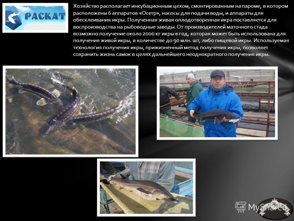 Компания занимается выращиванием рыбы в садках с 2007 года. Предметом деятельности компании является содержание маточного стада осетра и белуги, сформированного путем одомашнивания диких производителей (выловленных в бассейне Каспийского моря), а так