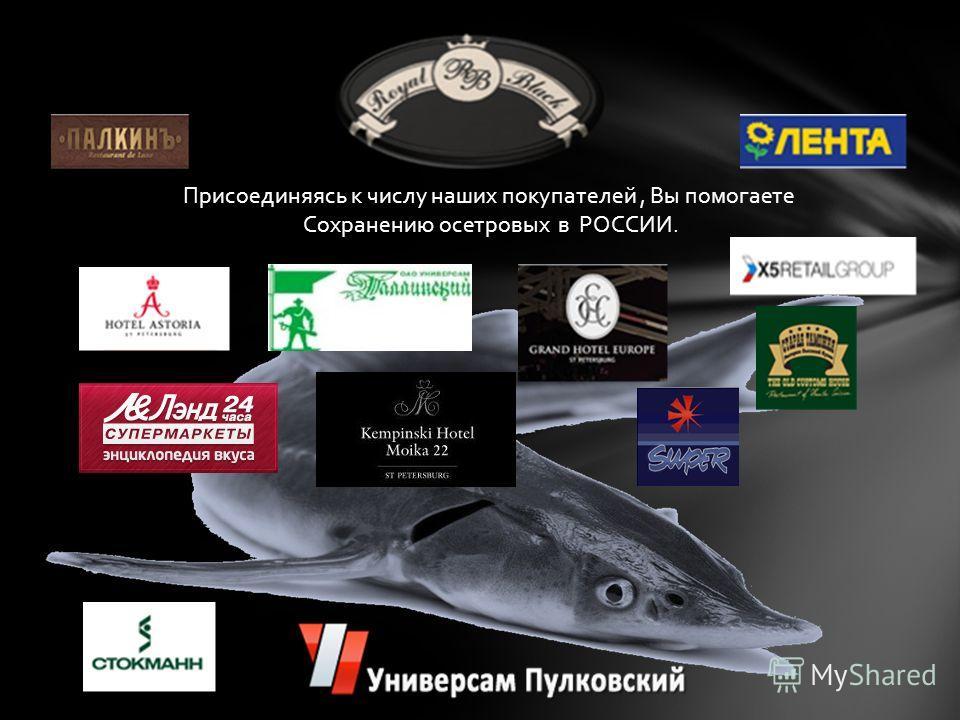 Рыбоводы Алексинского химического комбината успешно выращивают редких сахалинских или зеленых осетров, уже много лет находящихся на грани исчезновения. Если раньше эта порода рыб обитала в Тихом океане, Японском и Беринговом морях, то сейчас сохранил