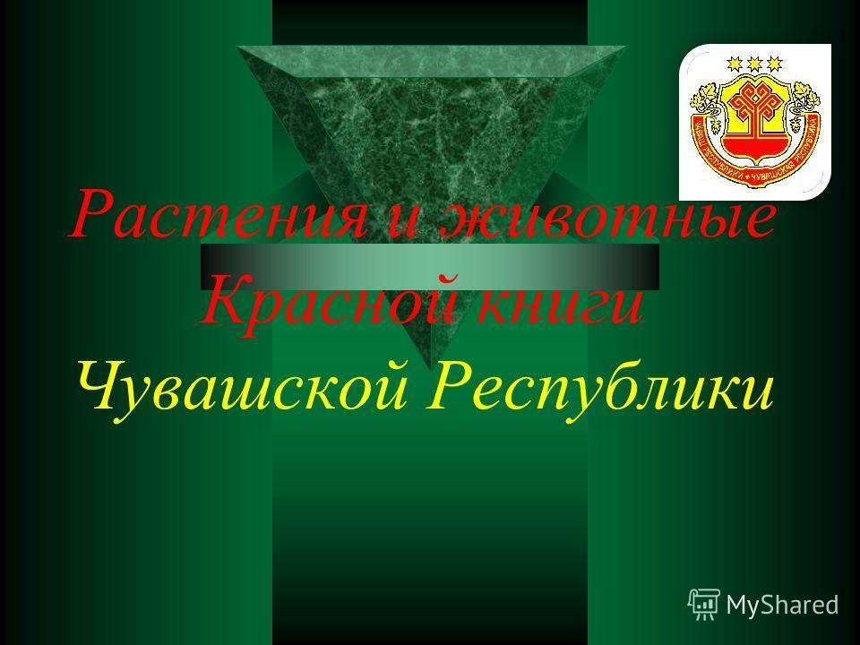 Проблема : Что мы можем сделать, чтобы сохранить и приумножить редкие растения и животные Чувашской Республики?