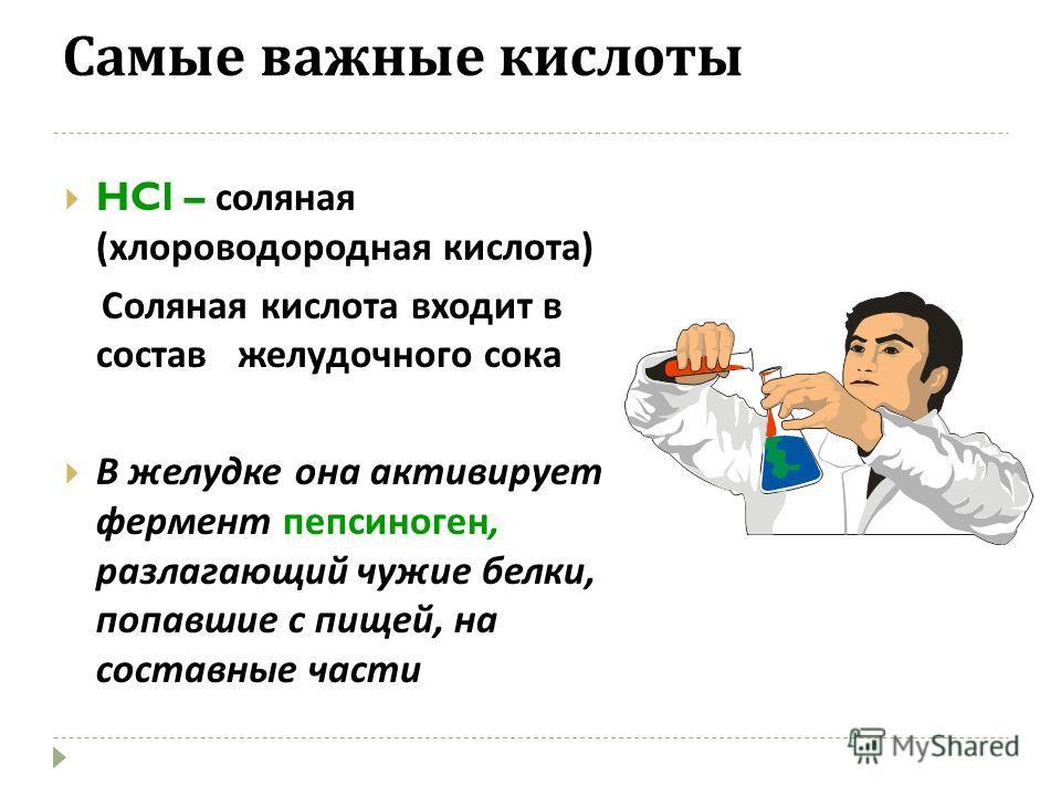 Самые важные кислоты HCl – соляная ( хлороводородная кислота ) Соляная кислота входит в состав желудочного сока В желудке она активирует фермент пепсиноген, разлагающий чужие белки, попавшие с пищей, на составные части