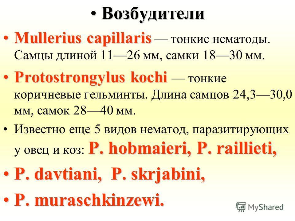 ВозбудителиВозбудители Mullerius capillarisMullerius capillaris тонкие нематоды. Самцы длиной 1126 мм, самки 1830 мм. Protostrongylus kochiProtostrongylus kochi тонкие коричневые гельминты. Длина самцов 24,330,0 мм, самок 2840 мм. P. hobmaieri, P. ra
