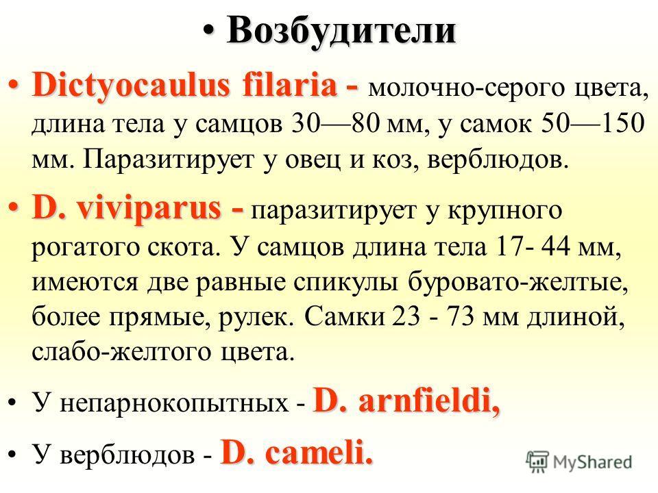 ВозбудителиВозбудители Dictyocaulus filaria -Dictyocaulus filaria - молочно-серого цвета, длина тела у самцов 3080 мм, у самок 50150 мм. Паразитирует у овец и коз, верблюдов. D. viviparus -D. viviparus - паразитирует у крупного рогатого скота. У самц