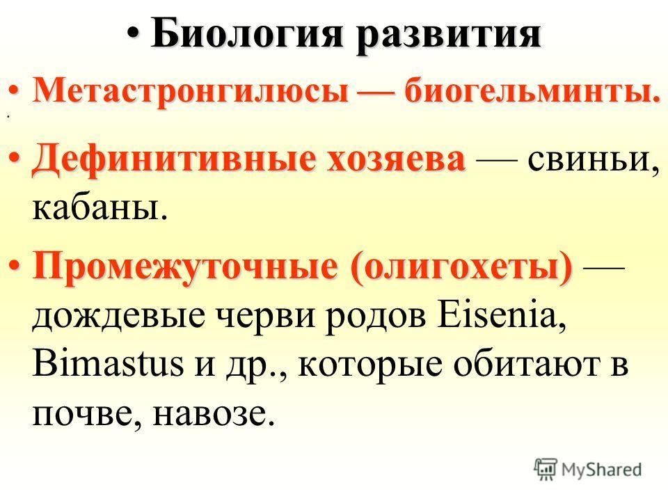 Биология развитияБиология развития Метастронгилюсы биогельминты.Метастронгилюсы биогельминты. Дефинитивные хозяеваДефинитивные хозяева свиньи, кабаны. Промежуточные (олигохеты)Промежуточные (олигохеты) дождевые черви родов Eisenia, Bimastus и др., ко