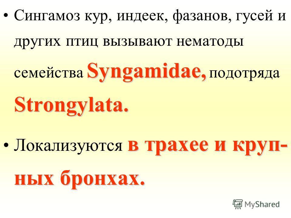 Syngamidae, Strongylata.Сингамоз кур, индеек, фазанов, гусей и других птиц вызывают нематоды семейства Syngamidae, подотряда Strongylata. в трахее и круп- ных бронхах.Локализуются в трахее и круп- ных бронхах.