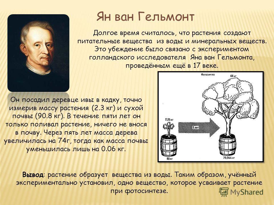 Ян ван Гельмонт Долгое время считалось, что растения создают питательные вещества из воды и минеральных веществ. Это убеждение было связано с экспериментом голландского исследователя Яна ван Гельмонта, проведённым ещё в 17 веке. Он посадил деревце ив