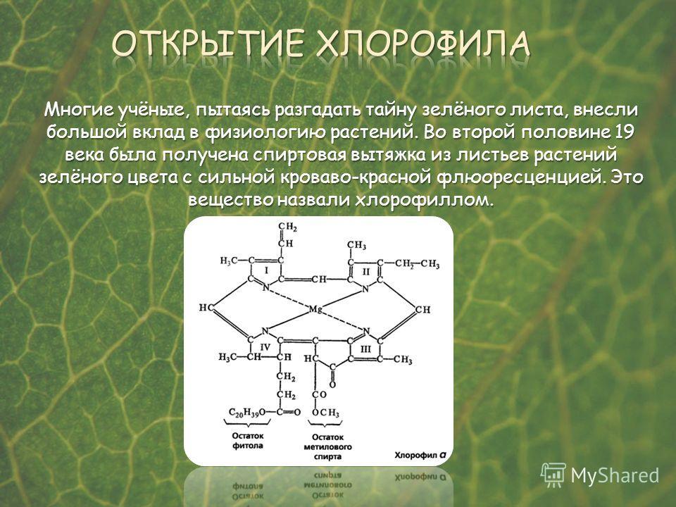 Многие учёные, пытаясь разгадать тайну зелёного листа, внесли большой вклад в физиологию растений. Во второй половине 19 века была получена спиртовая вытяжка из листьев растений зелёного цвета с сильной кроваво-красной флюоресценцией. Это вещество на
