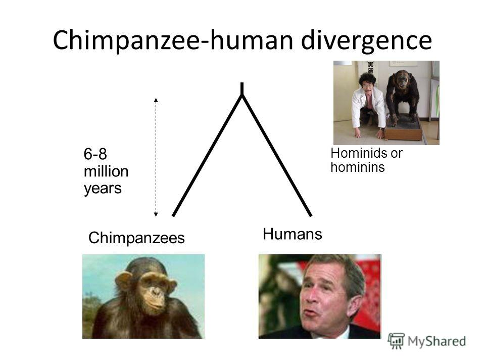 Chimpanzee-human divergence Chimpanzees Humans 6-8 million years Hominids or hominins