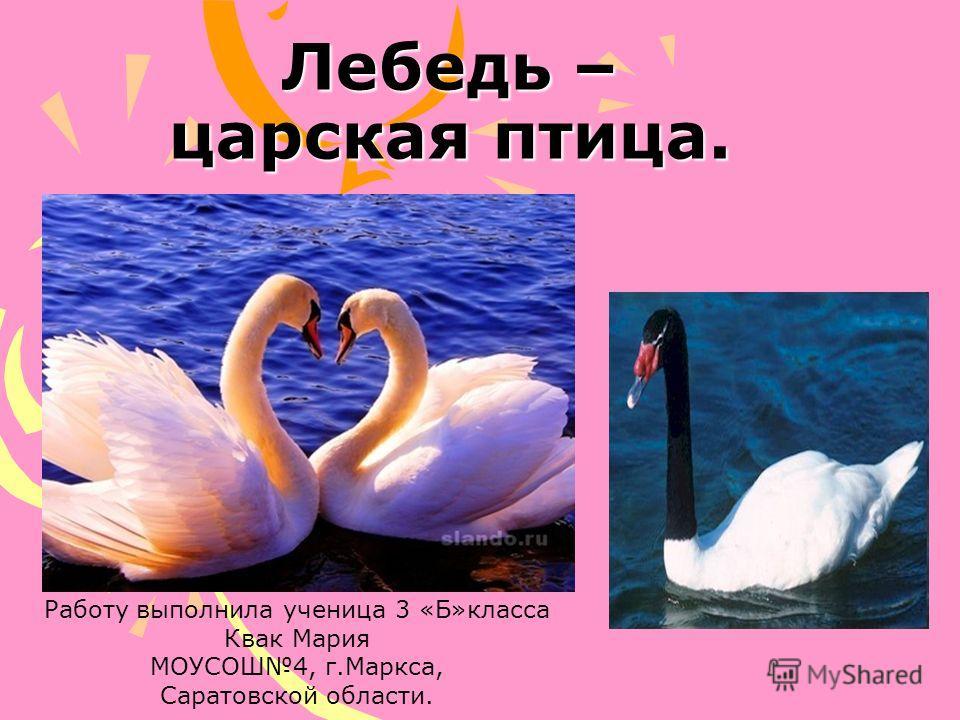 Лебедь – царская птица. Работу выполнила ученица 3 «Б»класса Квак Мария МОУСОШ4, г.Маркса, Саратовской области.