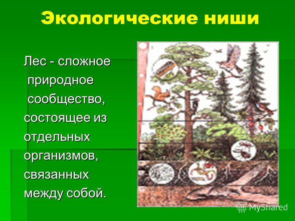 Экологические ниши Лес - сложное природное природное сообщество, сообщество, состоящее из отдельныхорганизмов,связанных между собой.