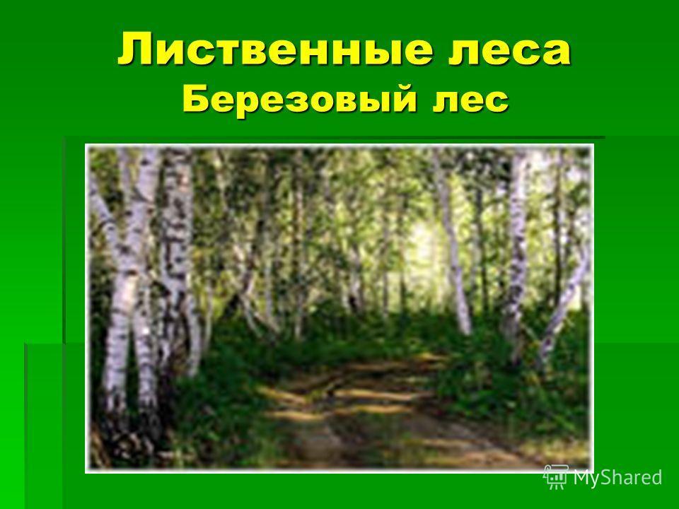 Лиственные леса Березовый лес