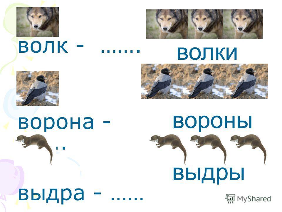 волк - ……. ворона -.….. выдра - …… волки вороны выдры
