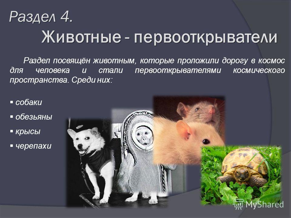 Раздел 4. Животные - первооткрыватели Животные - первооткрыватели Раздел посвящён животным, которые проложили дорогу в космос для человека и стали первооткрывателями космического пространства. Среди них: собаки обезьяны крысы черепахи