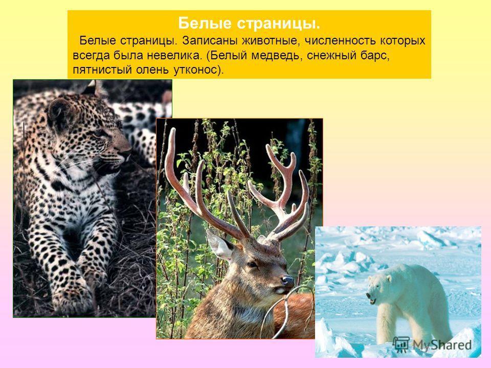 Белые страницы. Белые страницы. Записаны животные, численность которых всегда была невелика. (Белый медведь, снежный барс, пятнистый олень утконос).