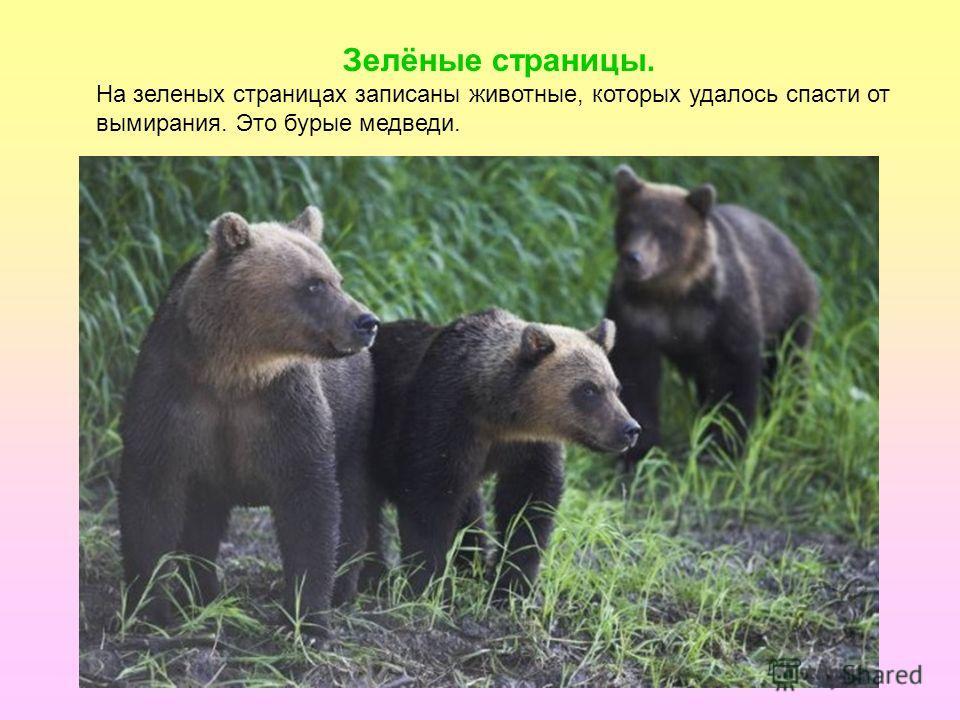 Зелёные страницы. На зеленых страницах записаны животные, которых удалось спасти от вымирания. Это бурые медведи.