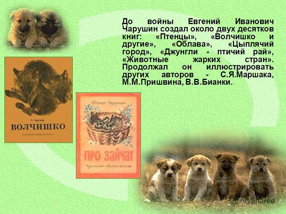 До войны Евгений Иванович Чарушин создал около двух десятков книг: «Птенцы», «Волчишко и другие», «Облава», «Цыплячий город», «Джунгли - птичий рай», «Животные жарких стран». Продолжал он иллюстрировать других авторов - С.Я.Маршака, М.М.Пришвина, В.В