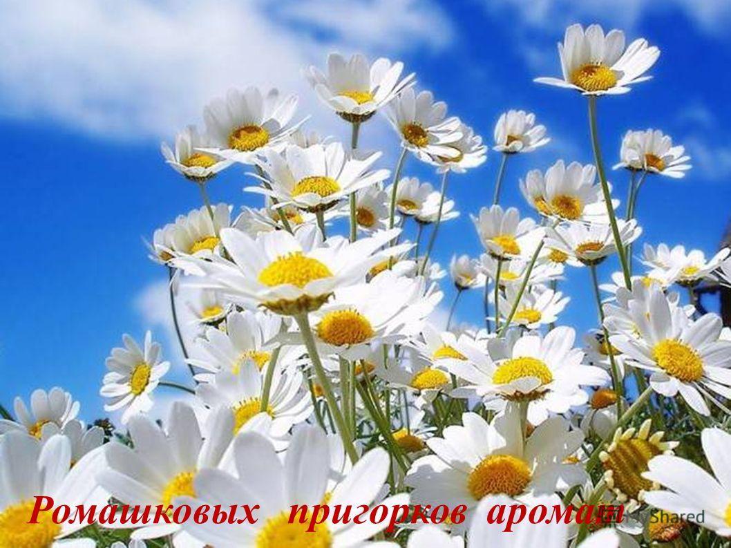 Краса березок стройных и ЦельветвистыхЦель Ромашковых пригорков аромат