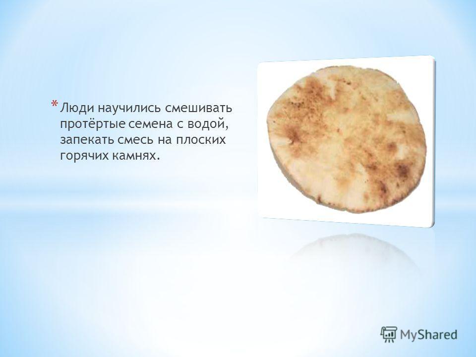 * Люди научились смешивать протёртые семена с водой, запекать смесь на плоских горячих камнях.